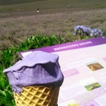 A yummy lavender ice cream